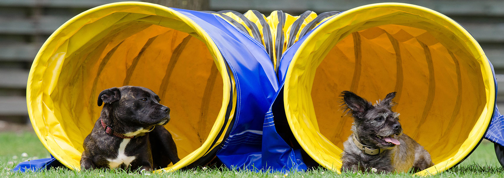 """Résultat de recherche d'images pour """"agility dog banner"""""""